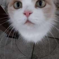 Отдам кошку, в Урюпинске