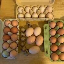 Яйцо куриное домашнее, в Дедовске