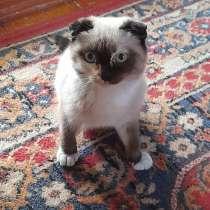 Продам котенка в добрые руки, в г.Талдыкорган