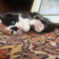 Отдам котёнка в хорошие руки, в Воронеже
