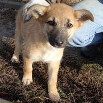 Очаровательный щеночек - девочка Кайли в заботливые руки, в Багаевского