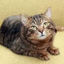 Тигран Потапыч, настоящий полосатый кот. В добрые руки, в Калуге