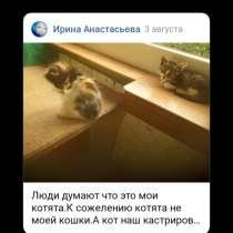 Котята из леса. В добрые ручки, в г.Могилёв