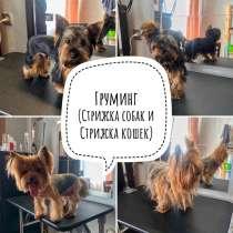 Груминг (стрижка собак и стрижка кошек), в Новосибирске