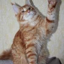 Предлагаются котята, в г.Павлодар