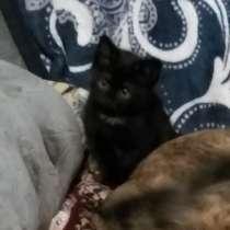 Котенок(девочка 2 месяца), в Междуреченске