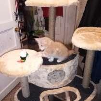 Домик для котов и кошек, в Санкт-Петербурге