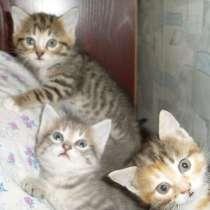 Котята бесплатно, в г.Донецк
