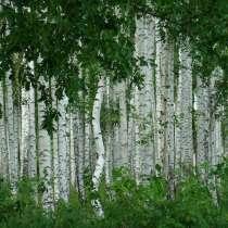 Термо-дрова из березы, в Новосибирске