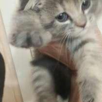 Продам Вислоухого Котёнка, в г.Ташкент