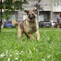 Герда - ласковая, послушная собака ищет дом, в Москве