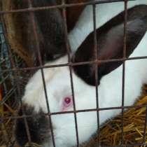 Племенные Кролики, в Перми