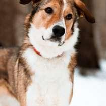 Джим - добропорядочный пёс ищет семью/, в Санкт-Петербурге