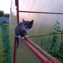 Отдам котят, кошечки, в Павловском Посаде
