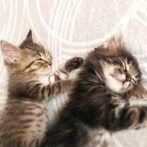 Очаровательные котята-подкидыши, в Раменское