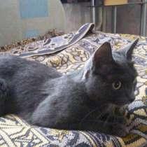Отдам кошку даром красавица, умница, в Березовский