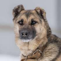 Ищет дом замечательная собака Малышка!, в Москве