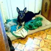 Собака, в Саратове