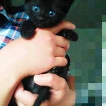 Котята в добрые руки. Мальчики.1,5 месяца. Енакиево, в г.Енакиево