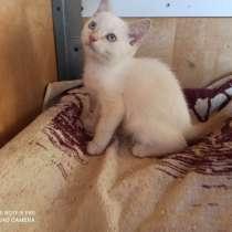 Красивый котенок ищет новый дом, в г.Брест