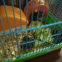 Джунгарские хомячки, в Ангарске