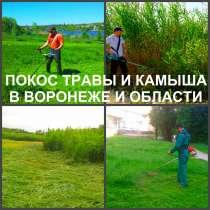 Покос травы. Мы косим траву в Воронеже, в Воронеже