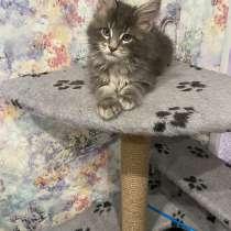 Продам котят, в Северске