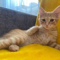 Котенок мальчик, в г.Могилёв