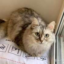 Красавица Санчо, добрая и умная домашняя кошечка, в Москве
