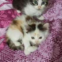Подарю симпатичных котят-девочек, в г.Алчевск