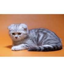 Продаётся котенок, в Волжске