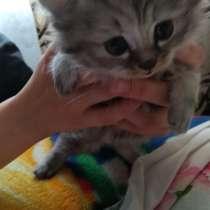 Даром котенок, в Новосибирске