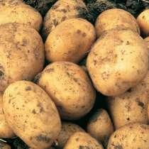 Продам картофель 250 р, в Пензе