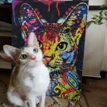 Кошка Басти, в г.Минск