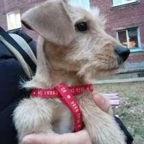Продам щенка, в Иркутске