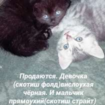 Продаются девочка чёрная вислоухая, и мальчик прямоухий, в г.Одесса