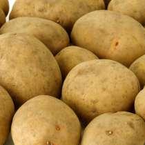 Картофель семенной в Волгоград, в г.Гродно