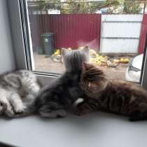 Плюшевые котята, в г.Гомель