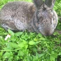 Кролики, в Хабаровске