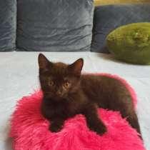 Отдам котенка(кота) бесплатно в добрые руки, 2 месяца, в Москве
