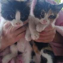 Симпатичные котята ищут себе хозяев. Мама отличная мышеловка, в г.Алчевск