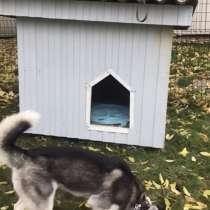 Утеплённая будка для собаки, в Москве