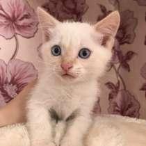 Котёнок в добрые руки, в Бийске