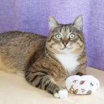 Добрый котик Будда, воплощение домашнего уюта в дар, в Москве