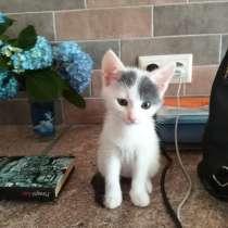 Ласковые котята ищут дом!, в Адлере