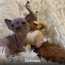 Котята, в Балашихе