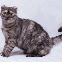 Малуша - красивая и ласковая кошка в добрые руки, в Москве