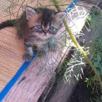Котята в добрые руки, в Стерлитамаке
