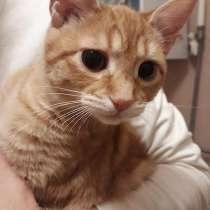 Отдадим котёнка в добрые руки г. Электросталь, в Электростале