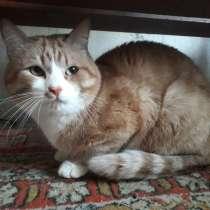 Котик, в Нижневартовске